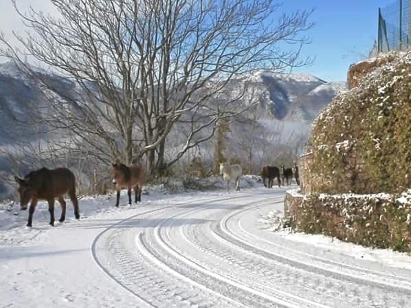 Le case dell'Arco, Monte San Vito, Scheggino, cavalli